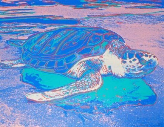 Turtle 1985